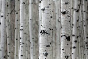 Træpleje forskønner mange områder